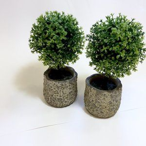 Other - Single Ball Boxwood Topiary